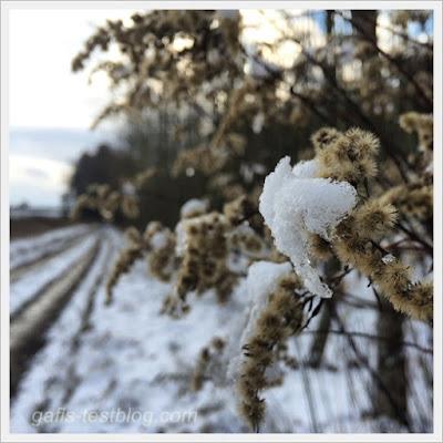 Pflanzen mit Schnee