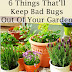 6 Things That Will Keep Bad Bugs Out Of Your Garden