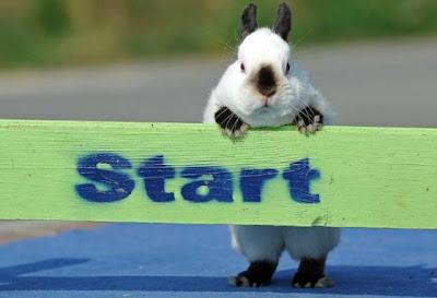 foto coelho correndo