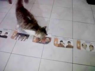 Kemenangan Jokowi-Ahok Diramalkan Seekor Kucing
