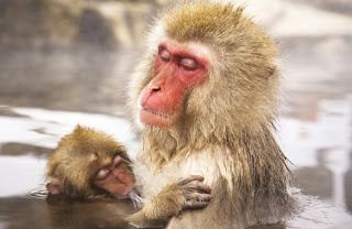 Un singe et son petit