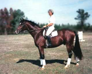 Dressage for the Western Rider