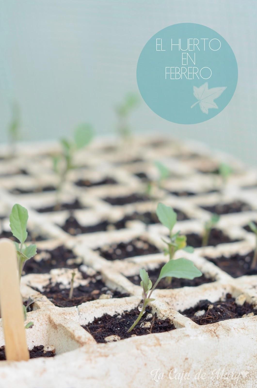 huerto-febrero