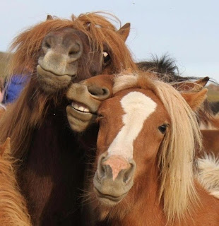 horses pose for camera, funny animal pictures, animal pics