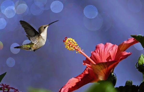 imagen de coloridas aves