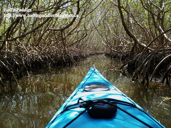 Best Places to Kayak in Central Florida  The Wilderness