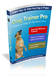 Dog Training...