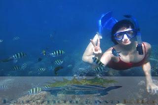 berenang dan snorkeling di karimunjawa