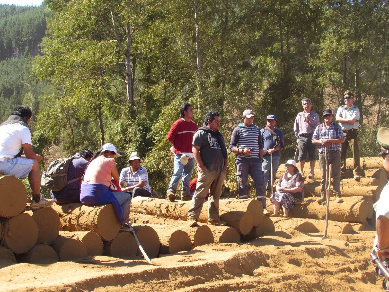 Comuneros Mapuches de Lumaco, ingresan al Fundo de la Forestal Arauco-Valdivia