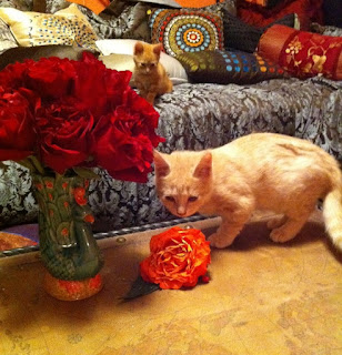 Sam and Dean Cats with Roses - Stein Your Florist Co.