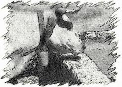 El buey y la fuente