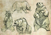 Bear Drawings. Here are some bear studies I've done.