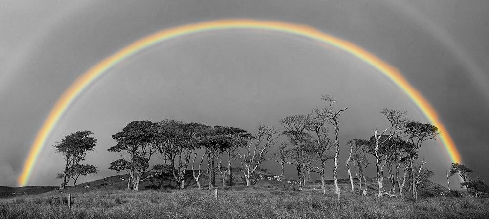 beautiful black and white nature photography | Nice Pics ...