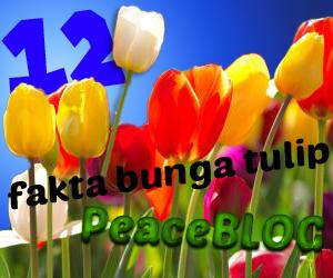 12 Fakta menarik tentang bunga tulip