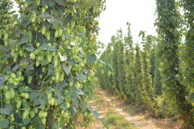 Bale Breaker Brewing Company.  Yakima, WA