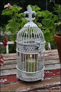 Trädgård, ljus, pelargon