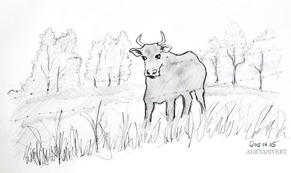 aliciasivert, alicia sivert, alicia sivertsson, teckna, måla, skapa, alster, konst, öva, utmaning, teckningsutmaning, makeri, bläck, ink, rita, sketch, drawing, draw, illustration, illustrera, tisteldrake, tjur, ko, cow, bull