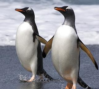 gambar penguin raja yang homo-Binatang-Binatang dan hewan Yang Homo di dunia - munsypedia | un1x project