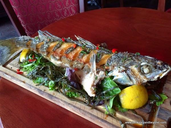 Branzino Chinese striped sea bass at Bobo's Lounge in San Francisco