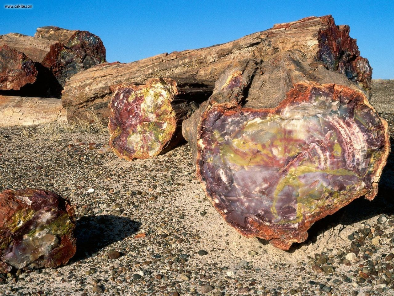 Arizona's Petrified Forest
