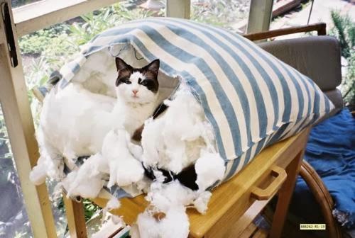 travesseiro rasgado gato