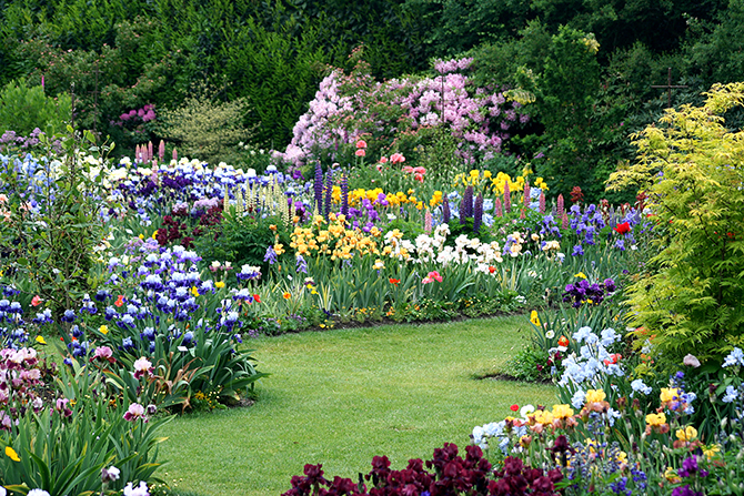 How To Grow Magnificient Irises Iris Garden Design