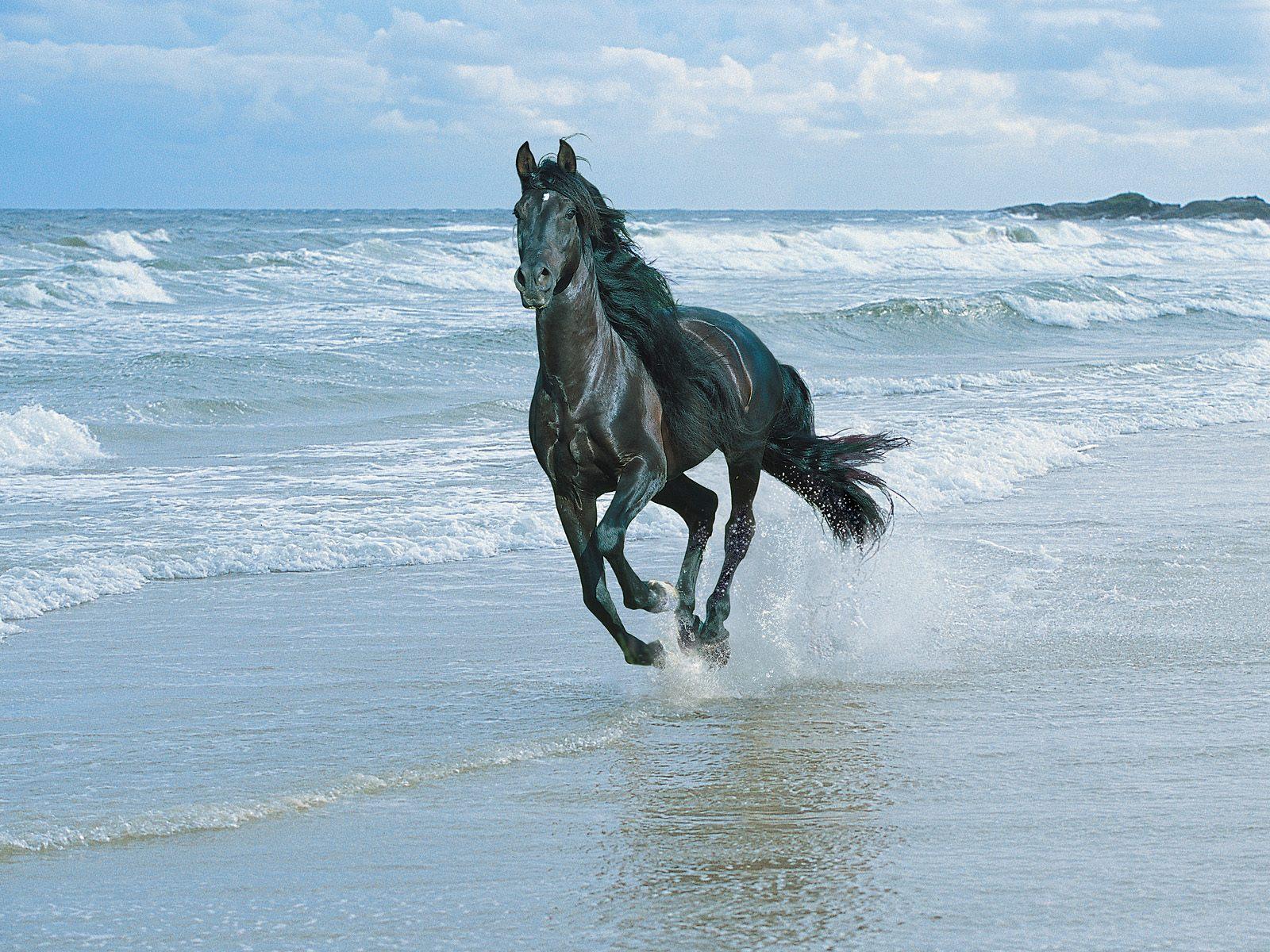 Most Inspiring   Wallpaper Horse Ocean - horse+pics+(4)  Picture_92773.jpg