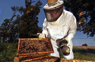 Κέντρο ΔΗΜΗΤΡΑ Κυπαρισσίας: Τριήμερο Μελισσοκομίας!