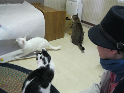 Japan Cat Network.