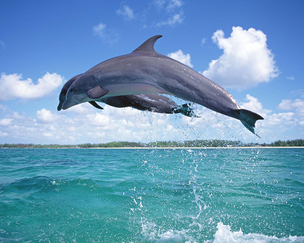 http://4.bp.blogspot.com/-dYbAoKIyhMg/T4ZL7izdxZI/AAAAAAAABFw/iZiwLbohoD4/s1600/los+delfines+3.jpg