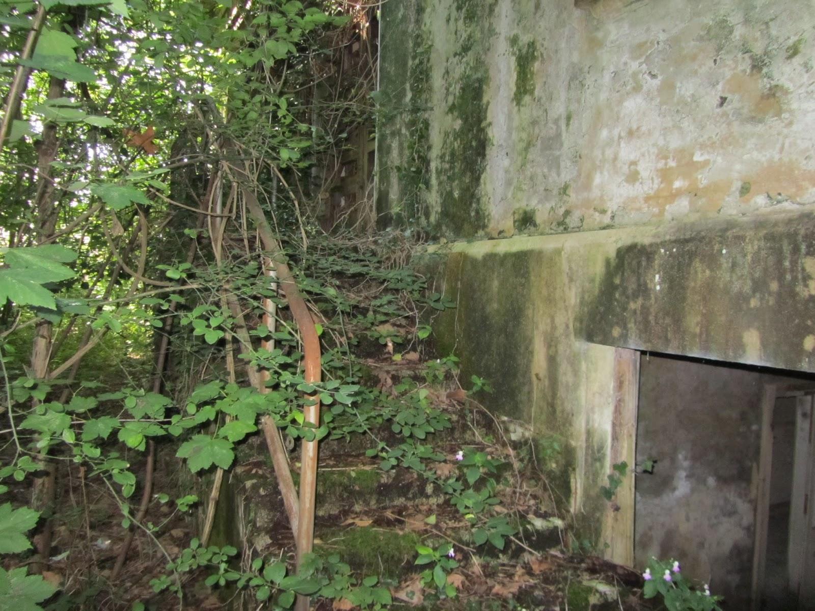 Piante Per Ingresso Buio : La fabbrica riconquistata dalla natura polveriera di