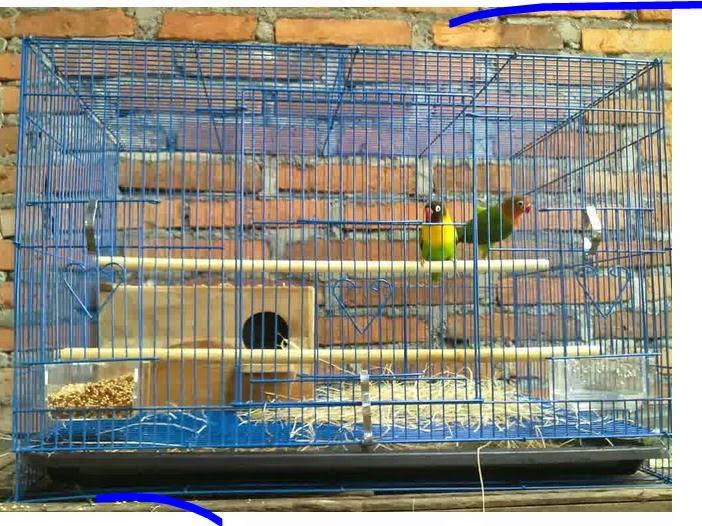 Ternak Lovebird dengan meletakkan 1 pasang burung lovebird dalam satu ...