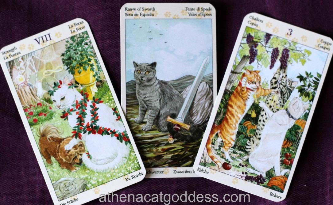 3 card spread for Tuiren
