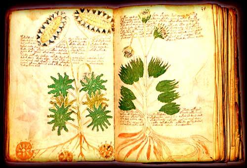 Manuscrito Voynich (Herbario)