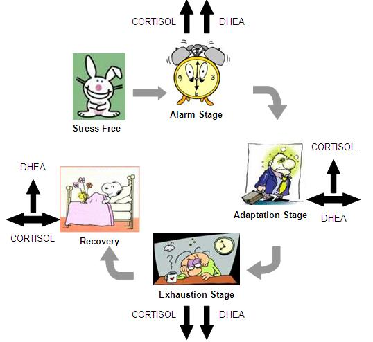 stress and the fight or flight mechanism The fight or flight response refers to a specific biochemical reaction that both humans and animals experience during intense stress or fear the fight-or- flight response is also known as the acute stress response these physical reactions are the result of the 'fight or flight' response system, an ingenious mechanism.