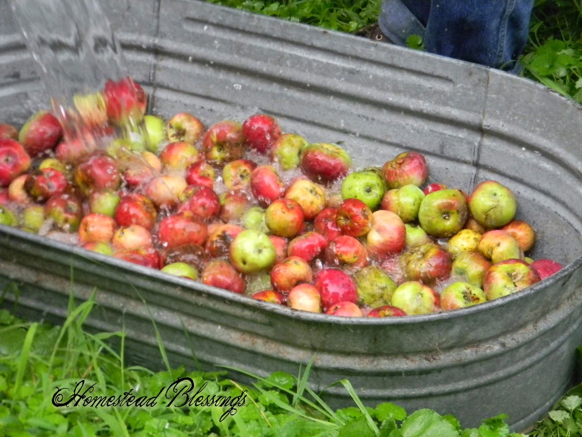 Bushels of Apples