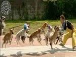 Anjing Terbanyak Melompati Tali