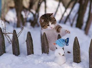 gatito dulce