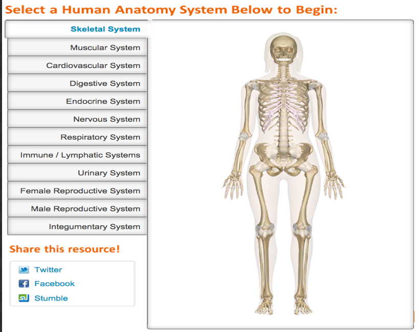 Great Websites To Teach Anatomy Of Human Body In 3d