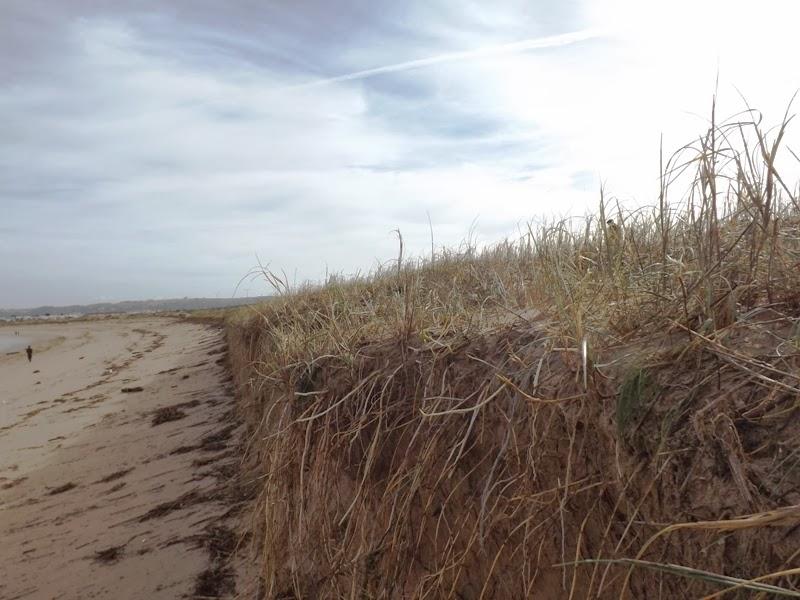 a importncia da vegetao dunar