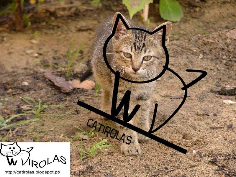 Catirolas