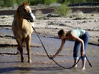 horse lead water please