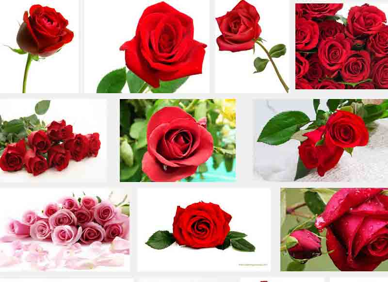 Red flowers list