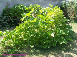 misto di zucchine ai tre profumi