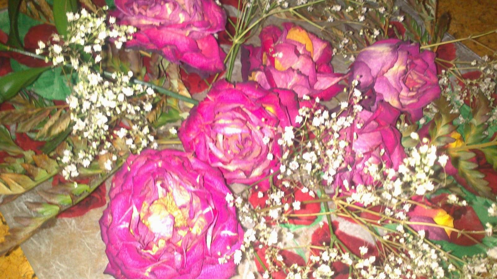 flores rosas naturales Descargar Fotos gratis Freepik - Ramos De Rosas Naturales Imagenes
