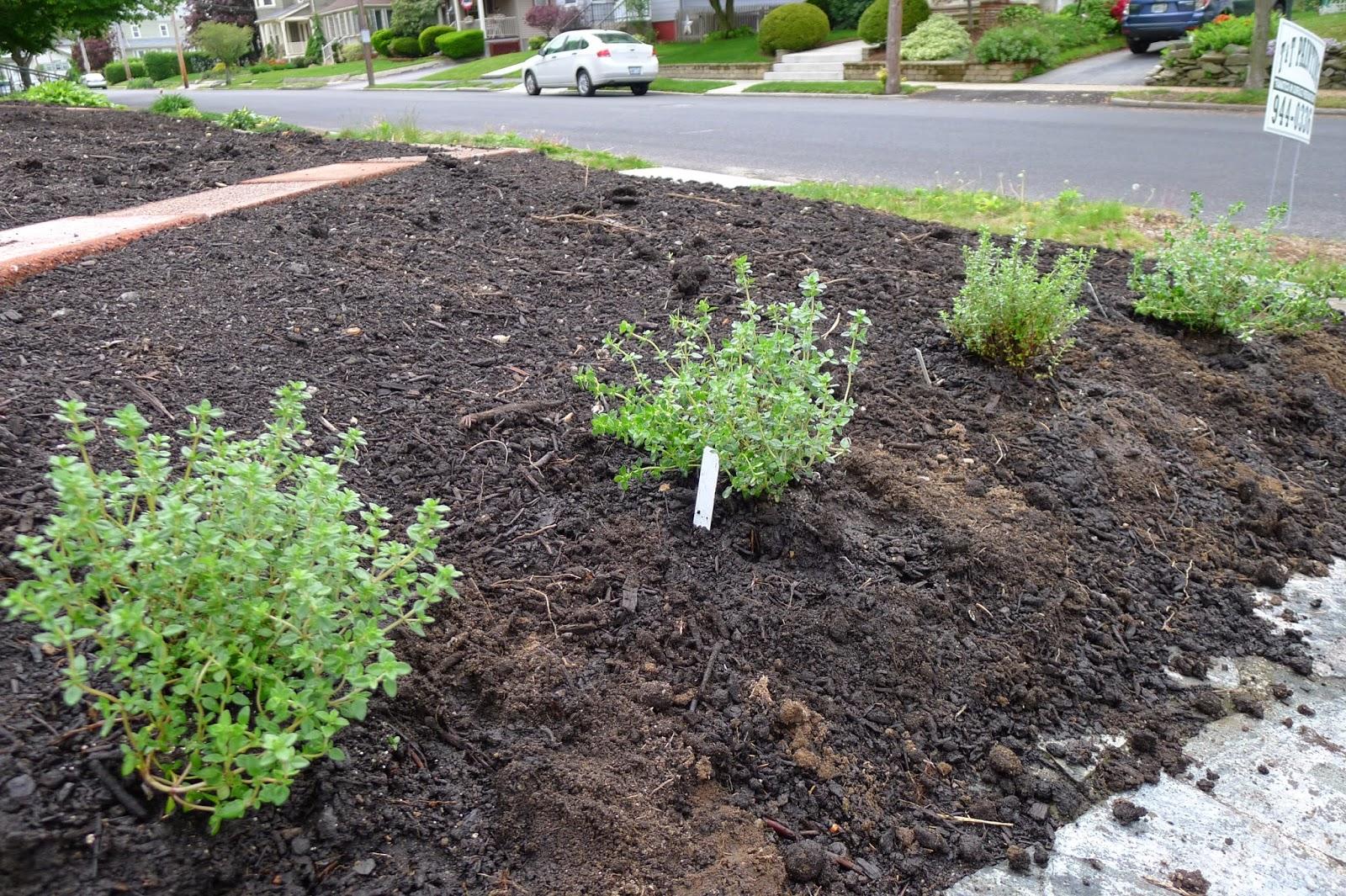 Soil erosion, thyme, edible landscaping