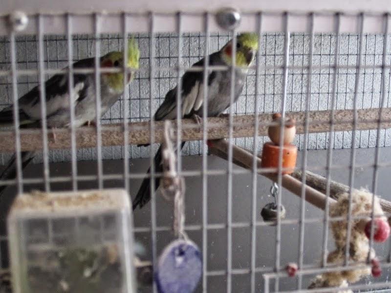 Νέο χτύπημα κατά της παράνομης εκτροφής και διακίνησης ειδών άγριας πανίδας