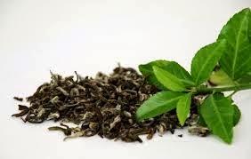 Rôle actif du thé vert dans l'alimentation anti-âge