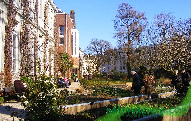 jardin botanico de Amsterdam