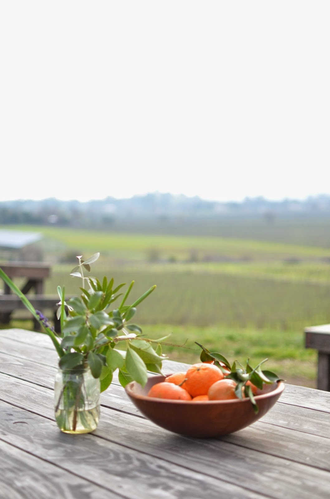 wine country, rustic wine country vibe, clementines, scribe winery